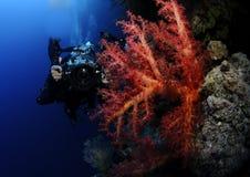 Underwater cameraman Stock Photo