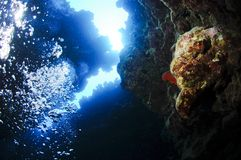 Underwater canyon Stock Images