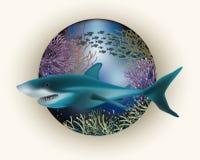 Underwater card white shark Stock Photos