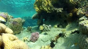 An underwater cave. Underwater coral reef red sea. The corals and fish. Transparent and warm water. Underwater life tropical fish. Beautiful exotic fish stock footage