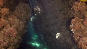 Underwater cave with nice sun light coming from the surface. stock video footage