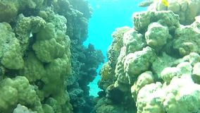 An underwater cave. Snorkeling in the Red sea. Red sea Underwater life fish on the bottom. The corals and the caves. Corals. Fish and clear water. Tropical sea stock video