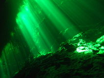 Underwater cenote cave diving picture showing gree. Diving picture from a cenote in Mexico showing green light rays from the suns light passing through jungle Stock Photos