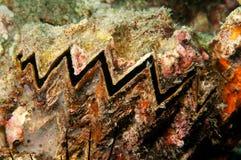Underwater clam Royalty Free Stock Photo
