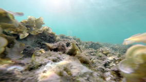 Underwater : clear sea water with moving grass. Underwater : clear blue sea water with moving grass stock video footage