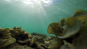 Underwater : clear sea water with moving grass. Underwater : clear blue sea water with moving grass stock footage