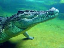 Head of crocodile under water Royalty Free Stock Photo