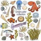 Underwater collection: shells, starfish, seaweed, deep sea fish, Royalty Free Stock Image