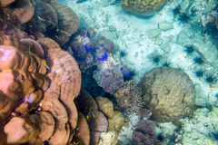 Underwater colorful coral reef and fish Royalty Free Stock Photos