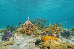 Underwater on a colorful seabed in the Caribbean Royalty Free Stock Images