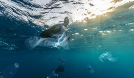 Underwater global problem with plastic rubbish. Underwater concept of global problem with plastic rubbish floating in the oceans. Hawksbill turtle in caption of royalty free stock photography