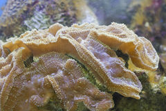 Underwater coral Stock Photography