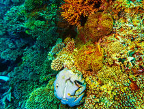 Underwater coral background Royalty Free Stock Image