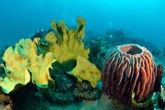 Underwater coral brilhante em Sipadan Foto de Stock