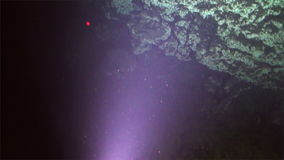 Underwater coral deep sea view from submarine Pacific Ocean Cocos Island. stock video