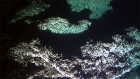 Underwater coral deep sea view from submarine Pacific Ocean Cocos Island. Extreme diving. Swim in world of unique colorful beautiful ecosystem nature. Wild stock footage