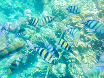 Underwater coral and fishes Stock Photo