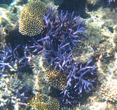 Underwater Coral Garden Stock Images