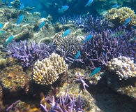 Free Underwater Coral Garden & Tropical Fish Stock Photo - 34971000