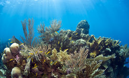 Underwater coral gardens Royalty Free Stock Image