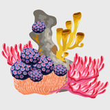 Underwater coral and other microorganisms Stock Image