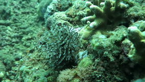 Underwater coral, and plants Bali, Indonesia. Underwater coral and plants Bali Indonesia stock video footage