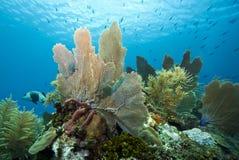 Underwater Coral reef. Underwater Coral gardens off the coast of Roatan Honduras Royalty Free Stock Photo
