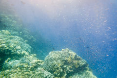 Underwater coral reef. Royalty Free Stock Photos