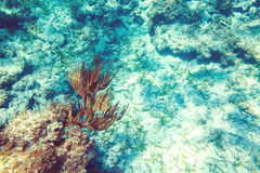 Underwater coral reef background in Caribbean sea Royalty Free Stock Image