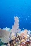 Underwater coral reef Royalty Free Stock Image