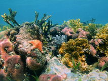 Underwater coral reef in the Caribbean sea Mexico Royalty Free Stock Photography
