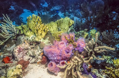 Underwater coral reef in Caribbean Stock Photo