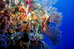Underwater coral reef in Carribean Royalty Free Stock Photos