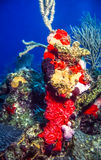 Underwater coral reef Stock Images