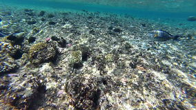 Underwater coral reef and colorful exotic fish. Underwater shooting stock video footage