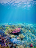Underwater coral reef Stock Photography