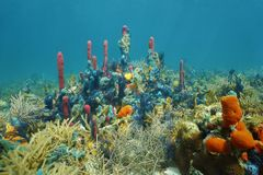 Underwater coral reef with colorful marine life Royalty Free Stock Photo