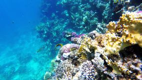 Underwater Coral Reef with Colorful Tropical Fish in Red Sea. Egypt.