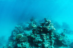 Underwater coral reef and fish in Indian Ocean, Maldives. Stock Photos