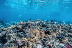 Underwater coral reef and fish in Indian Ocean, Maldives. stock image