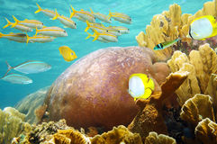 Underwater coral reef with fish school Royalty Free Stock Image