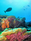 Underwater coral reef with fishes Stock Image