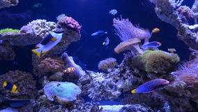 Underwater coral reef and fishes.  stock video