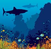 Underwater coral reef, fishes, shark and sea. Underwater nature and marine wildlife. Silhouette of big sharks, coral reef and tropical fishes in a blue sea Royalty Free Stock Images