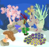 Underwater coral reef. With  funny  corals Stock Photos