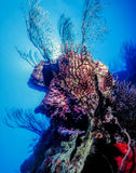 Underwater coral reef Royalty Free Stock Photos