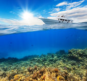 Underwater coral reef with horizon and water Stock Image