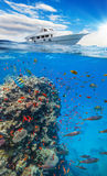 Underwater coral reef with horizon and water Royalty Free Stock Image