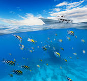 Underwater coral reef with horizon and water Stock Photo