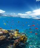 Underwater coral reef with horizon and water Stock Images